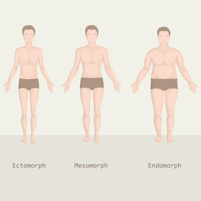 Körperbautypen